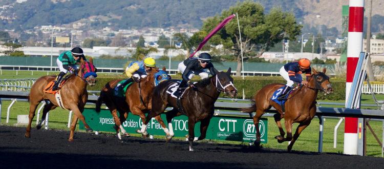 Platform Horse racing